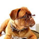 dog-734689_1280