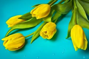 flowers-1018518_1280