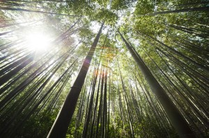 bamboo-364112_1280