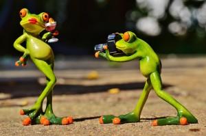 frog-881654_1280