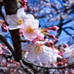 tokyo-1290329_1280