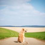 dog-1196414_1280