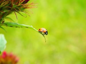 ladybug-1271964_1280