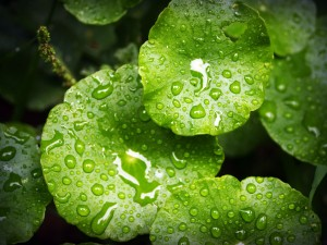leaf-1551223_1280