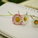 notebook-1405303_1280