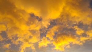 golden-1550199_1280