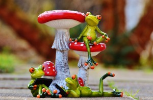 frogs-1175792_1280