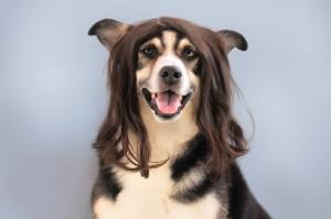 dog-1422857_1280