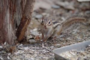 squirrel-980815_1280