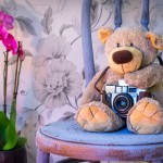 teddy-bear-1710641_1280