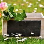 roses-2230508_640
