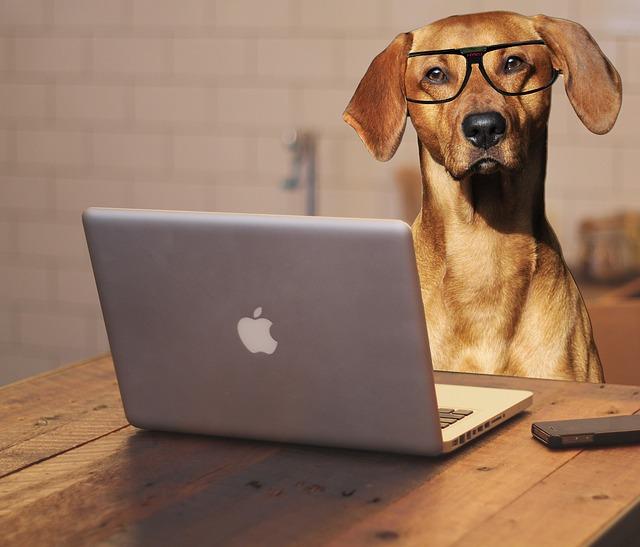 dog-2983021_640