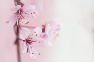 spring-2854205_640
