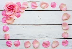 flower-3194081_640