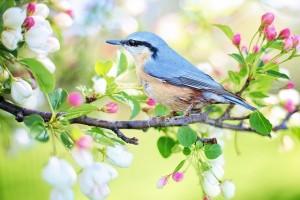 spring-bird-2295431_640