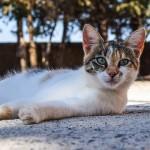 cat-2824789_640