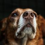 dog-813103_640
