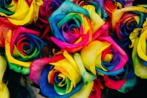 roses-828945_640