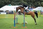 horse-3737765_640