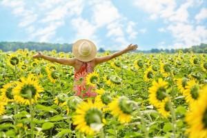 sunflowers-3640938_640