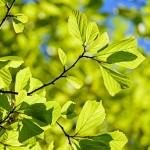 persian-oak-wood-3064187_640