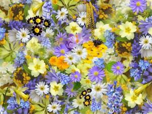 spring-flowers-110671_640